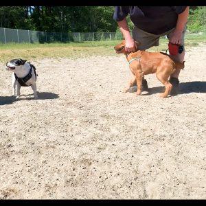 Tubbys Dog Park #4 thumb